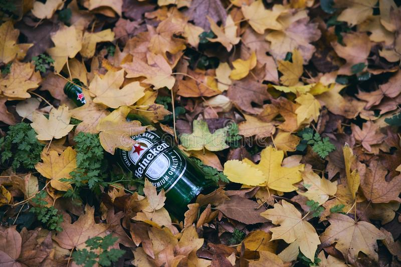 Empty bottle of Heineken beer lying on the ground in a park littered under fallen yellow leaves royalty free stock image