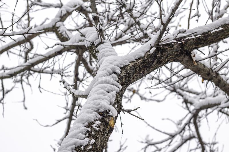 Empty branches of tree in winter royalty free stock images