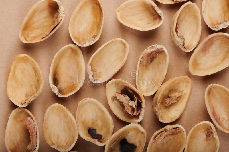 Empty brown shells stock photography
