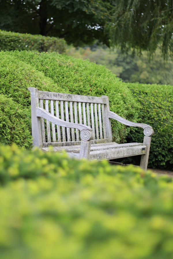 Empty Brown Wooden Bench Sitting in the Middle of Garden Hedges. Natural light, narrow depth of field, intentionally blurry foreground stock photo