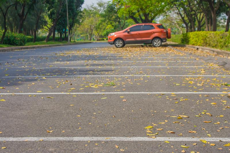 Empty car parking lot and yellow flowers fall on the concrete floor in public park surrounded with green trees and bush. Selective focus royalty free stock photos