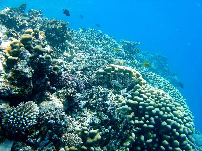 Empty coral reef stock image