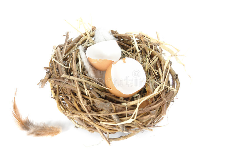 Empty egg shells in nest stock photos