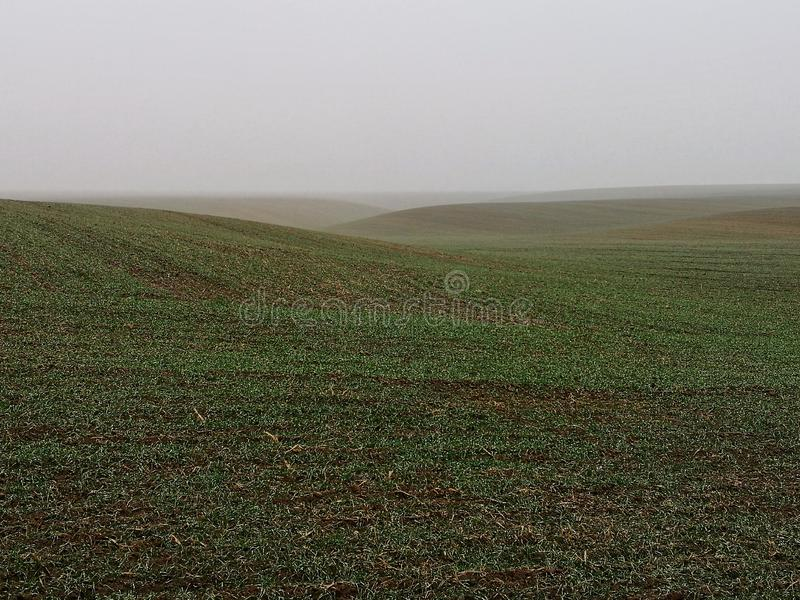 Empty farming field covered with mist stock images