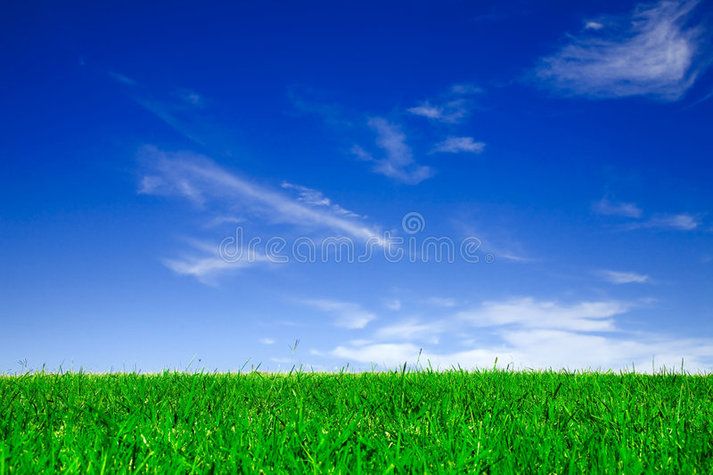 Empty field. Of green grass under clear blue sky royalty free stock image