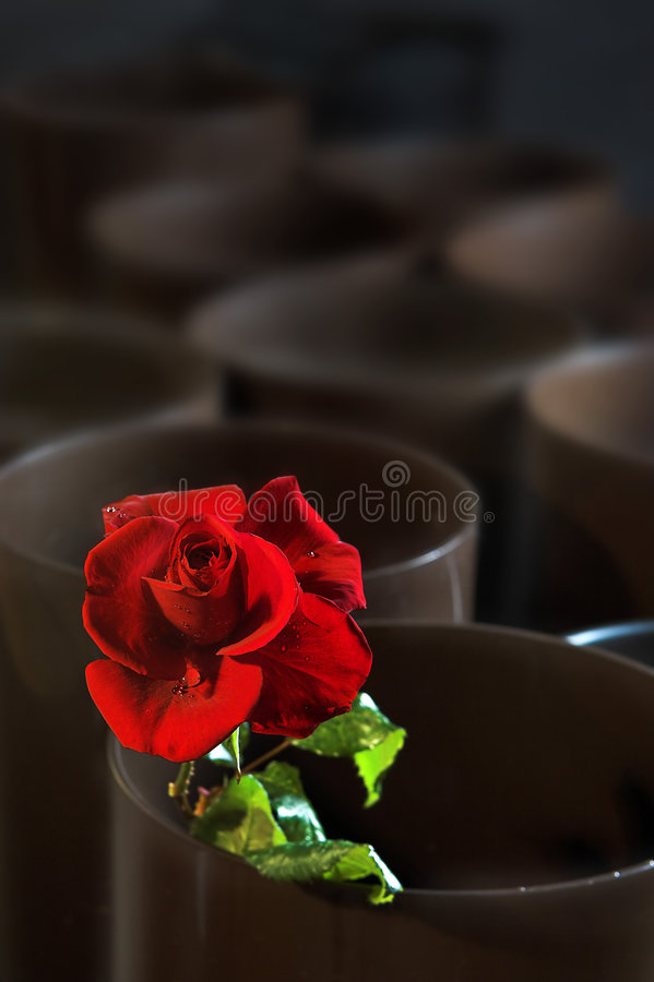Download Empty Flower Shop Stock Photo - Image: 1719490