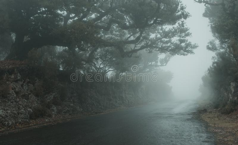 Empty foggy road on Madeira island royalty free stock images