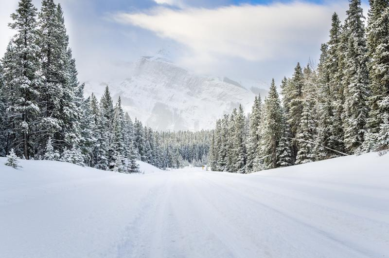 Empty Forest Road Covered in Fresh Snow stock photos