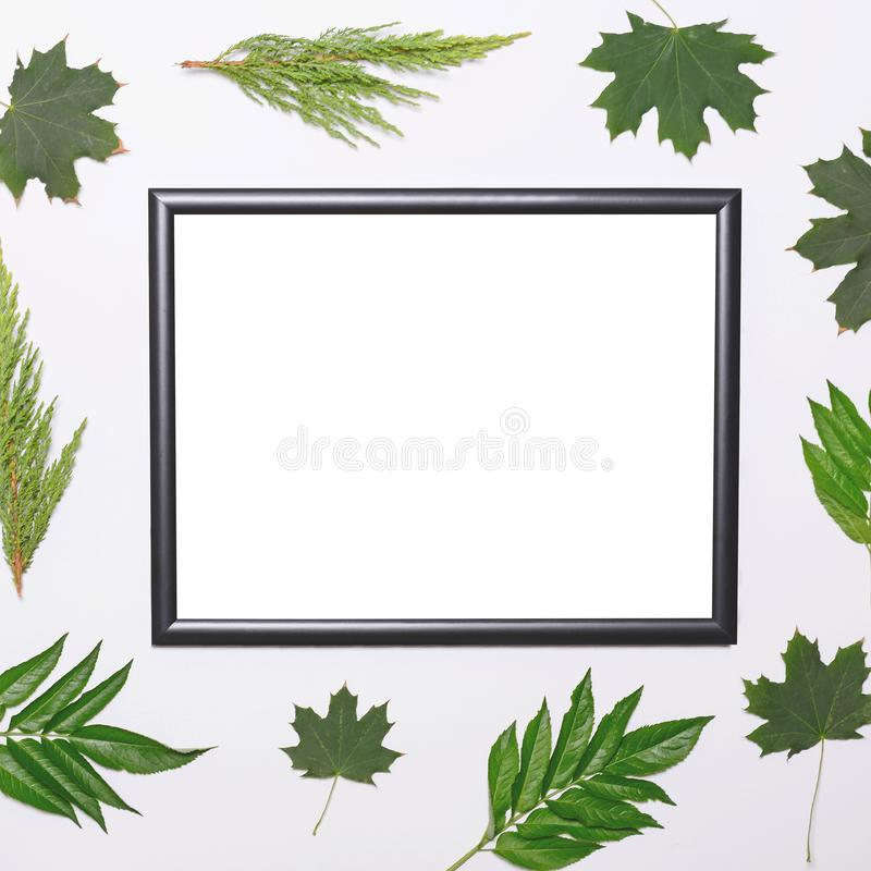 Empty frame with green leaves on white background - Flat lay mock up stock photography
