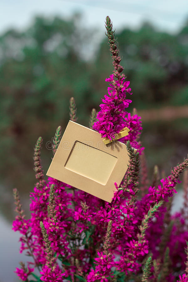 Empty frame hanging on a purple flower outdoors. Blank frame with yellow clothespin hanging on a purple flower outdoors royalty free stock photography