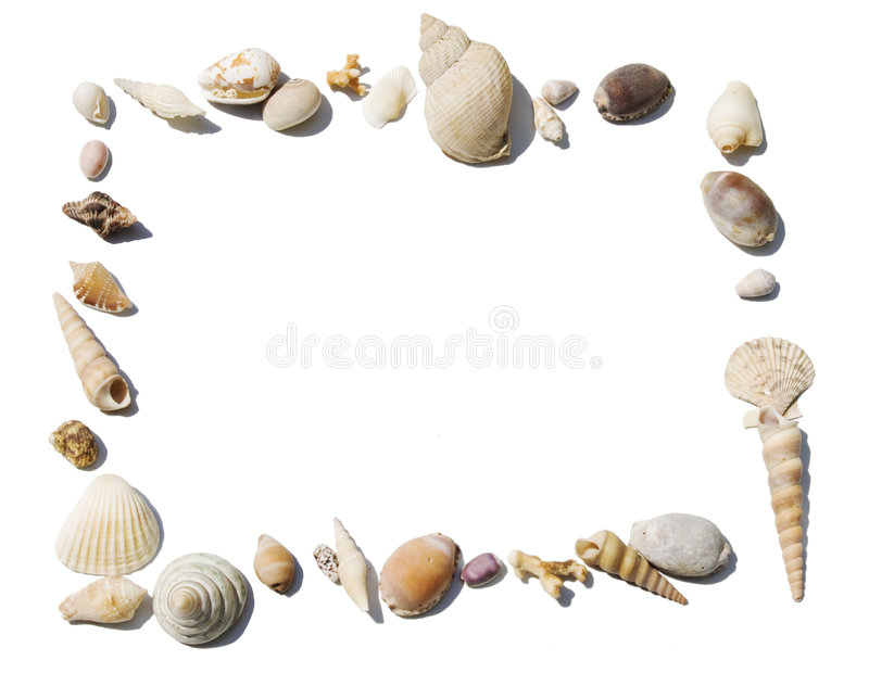 Empty frame with shells royalty free stock photo
