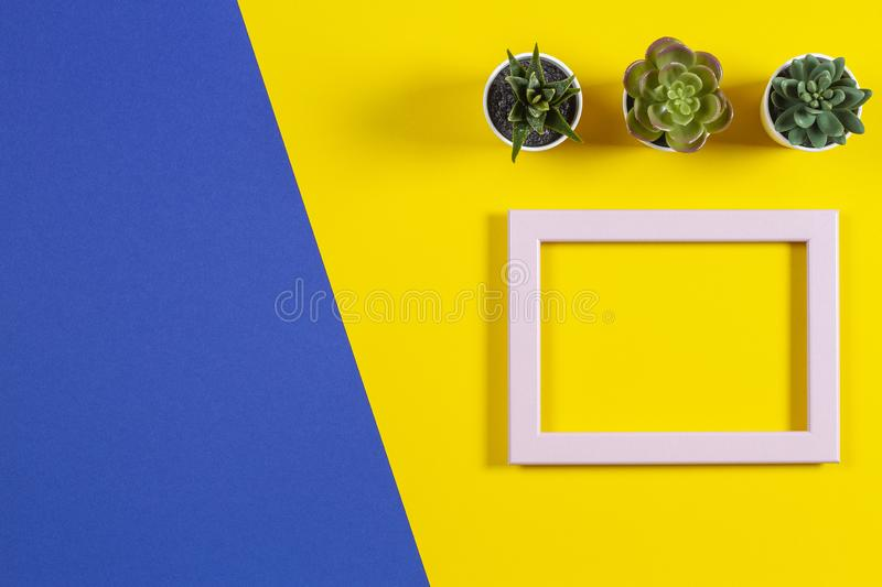 Empty frame and succulents on multicolored background. Top view, copy space stock image