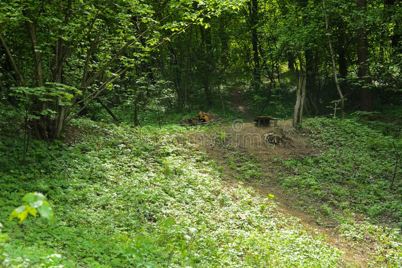 An empty gravel path in a dense green forest surrounded by tall royalty free stock photography