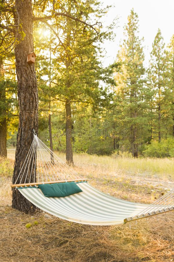 Empty hammock hanging from pine tree in backyard forest. Relaxing summer afternoon camping vacation background concept.  stock photos