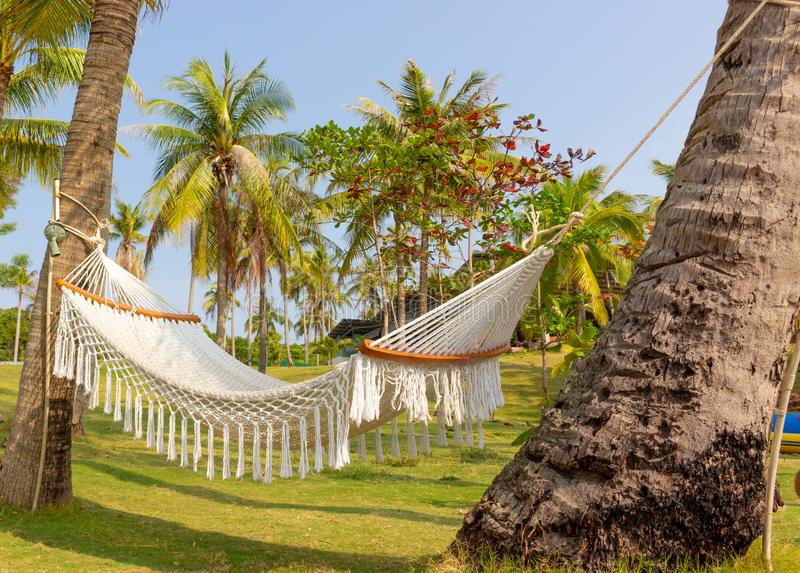 Empty hammock on a palm tree stock images