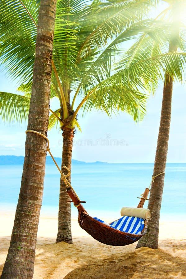 Empty hammock between palm trees royalty free stock photo