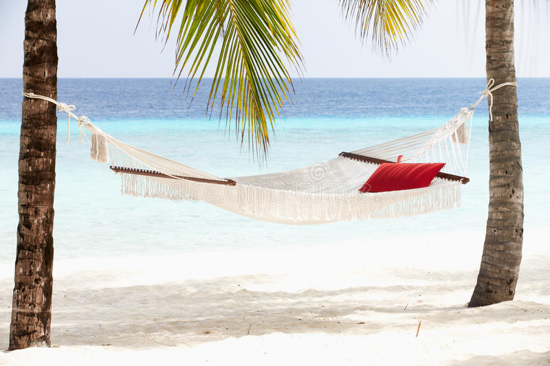 Download Empty Hammock Between Palm Trees Stock Image - Image: 30214729