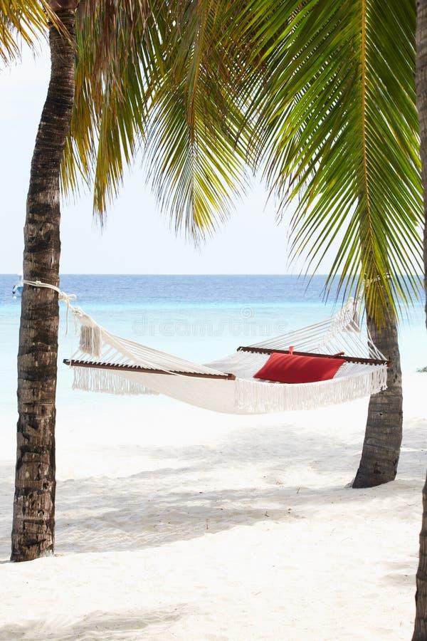 Download Empty Hammock Between Palm Trees Stock Photo - Image: 30214770