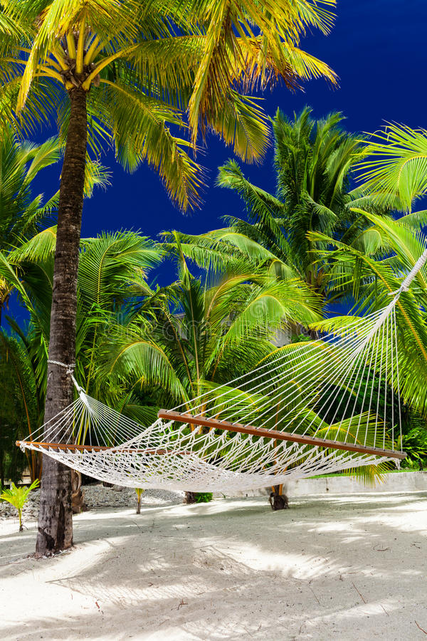 Empty hammock in a shade of palm trees on Cook Islands royalty free stock photography