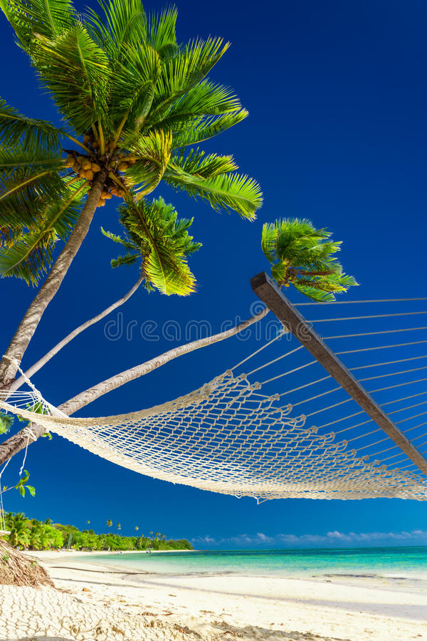 Empty hammock under palm trees on a beach of Fiji Islands stock images