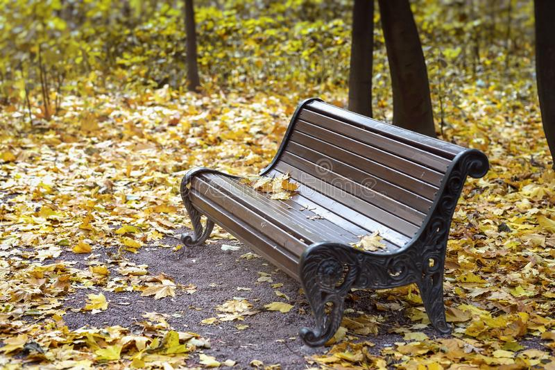 Empty lonely wooden brown bench in the city park, Yellow maple leaves. Autumn, fall season, sad mood, loneliness stock photography