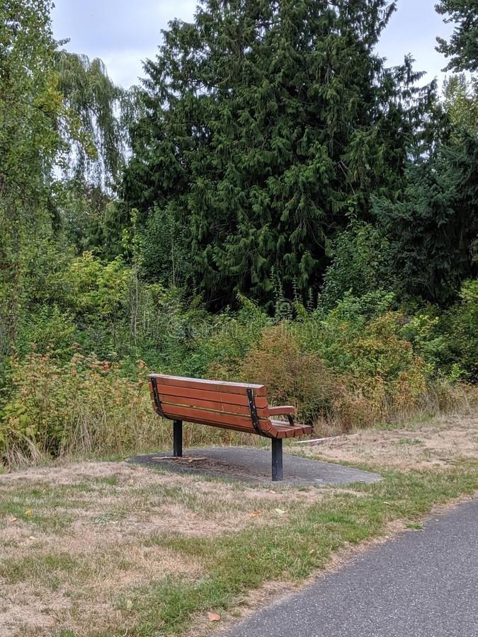 Empty park bench next to a walking path in a park filled with lush evergreen trees. Empty, lonely wooden park bench next to a walking path in a park filled with royalty free stock photo