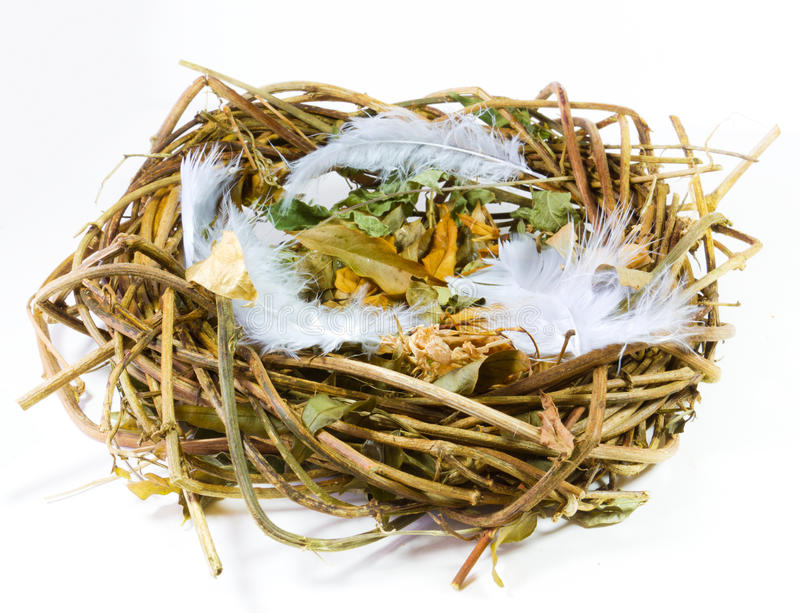 Empty nest. Conceptual image - empty nest syndrome royalty free stock photography