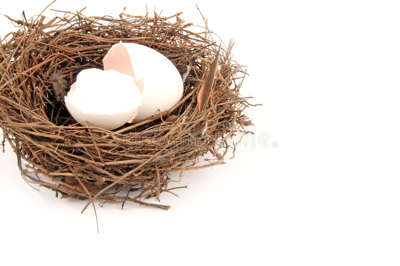 Download Empty Nest stock image. Image of twig, avian, nature, life - 3371225