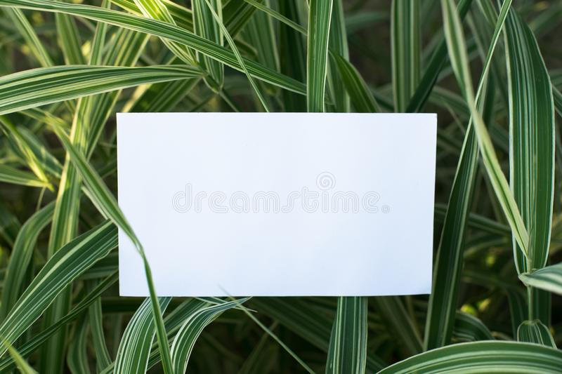 Empty note with green leaves royalty free stock photo