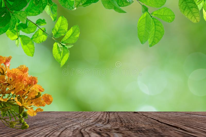 Empty old wooden on a bokeh backgrounds with leaves and flowers royalty free stock photography