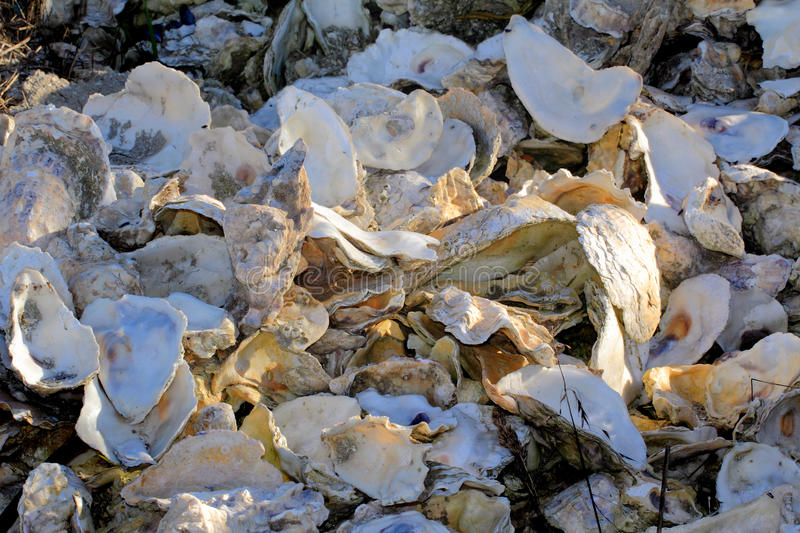 Empty oyster shells stock image