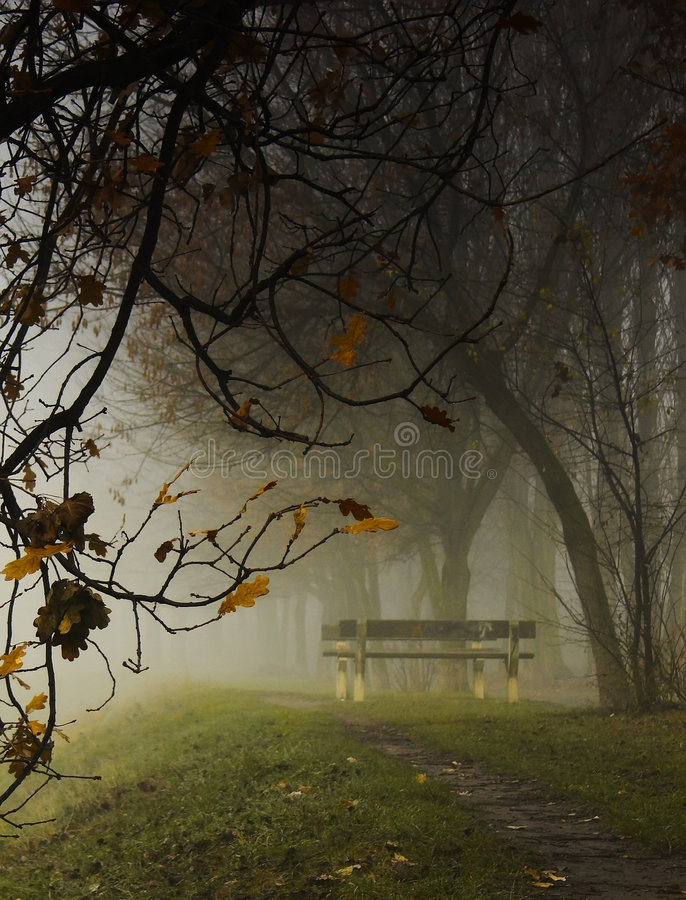 Empty park bench royalty free stock photo