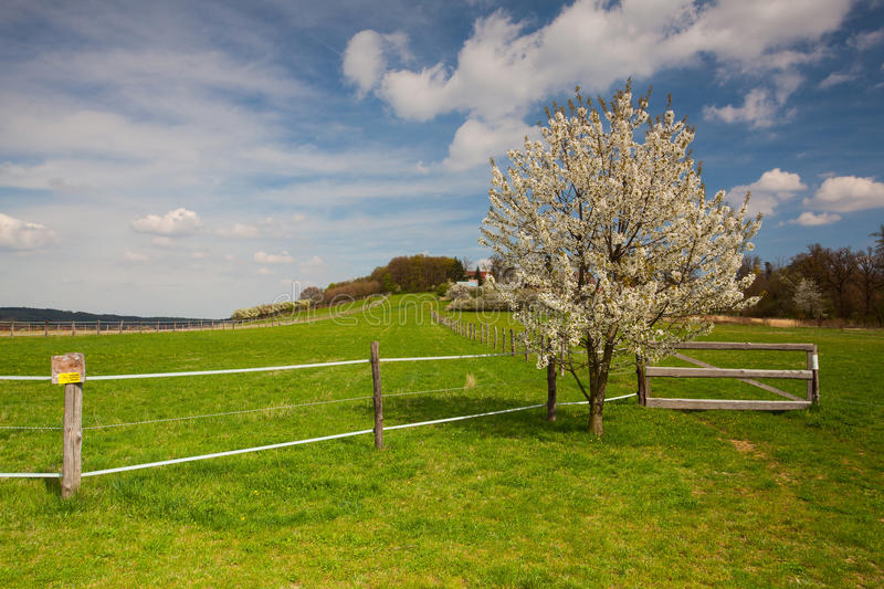 Empty pasture for cattle in spring stock photos