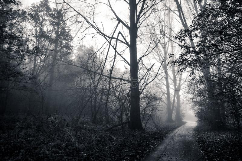 Path in foggy forest stock photos