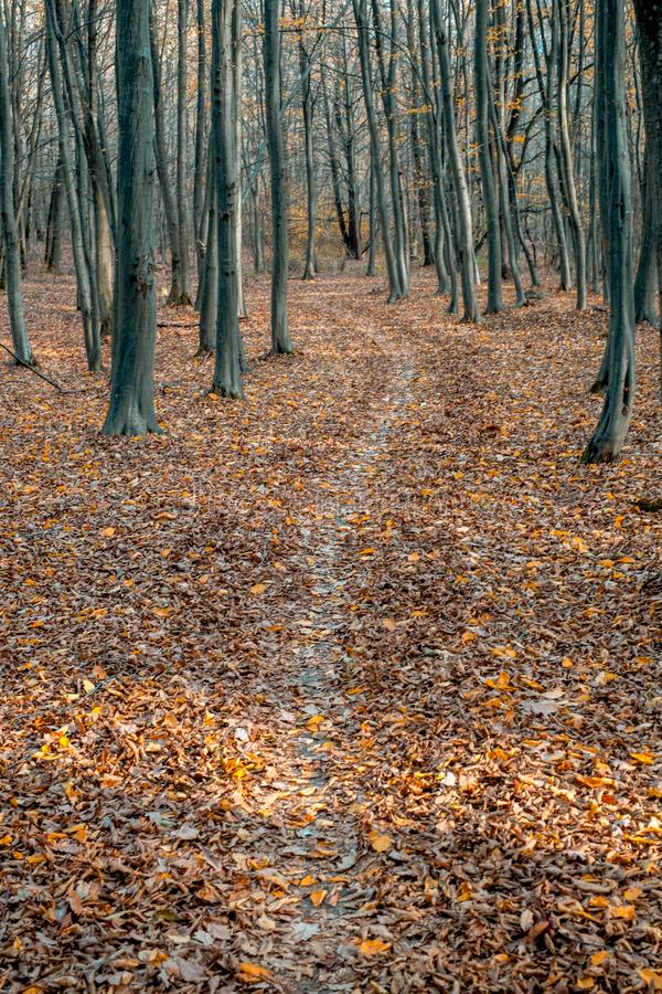 Empty path through the forest. Full frame stock image