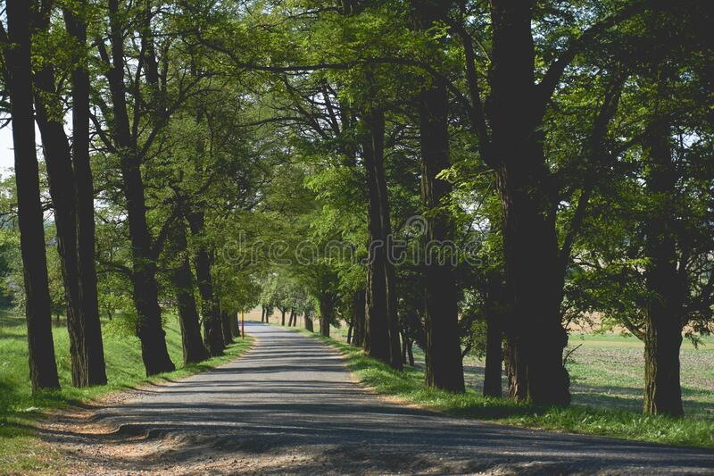 Empty Pathway Surrounded by Trees and Grass stock image