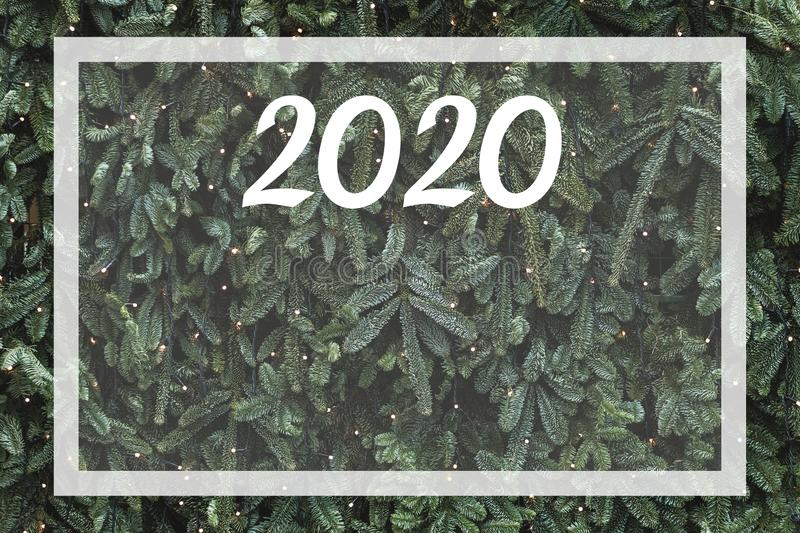 Empty place for plan 2020 year pine tree texture. Christmas pine tree background. Empty place for plan of 2020 year and future goals. Space for sign and design royalty free stock photo