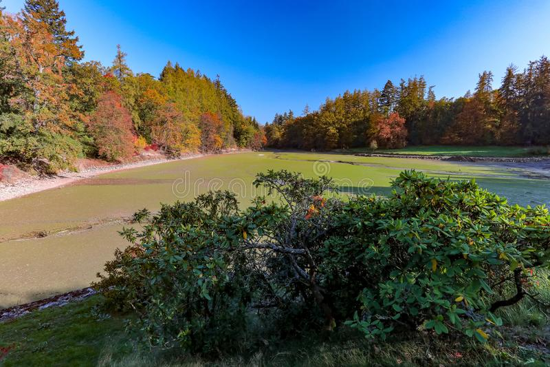 Empty pond after Fish harvest. On Cervena Lhota with autumn colored trees, Autumn in Czech republic, Europe stock images