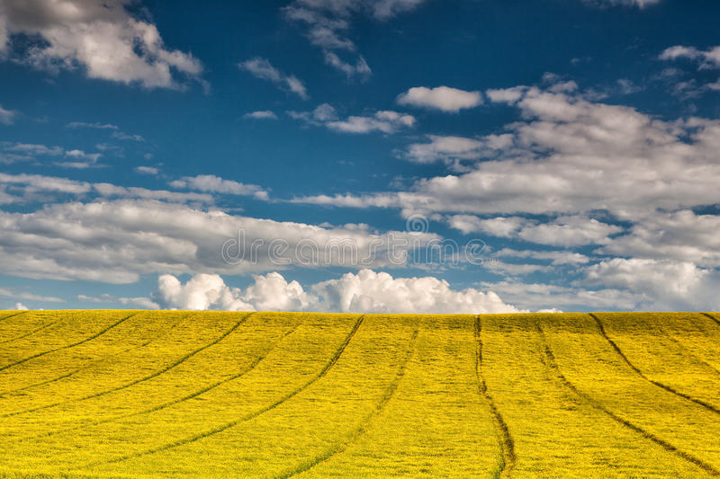 On the empty field. Empty field under blue sky in summer day royalty free stock photos