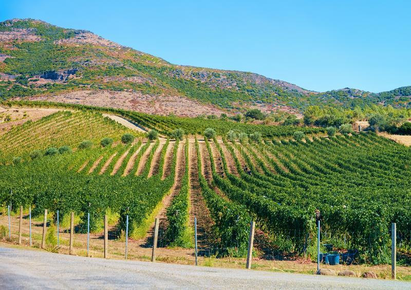 Empty road without cars in Sardinia Island with vineyards stock photography