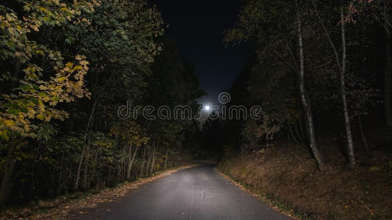 Empty road crossing pine tree woodland illuminated by moon. Loneliness and fear concept. royalty free stock photography