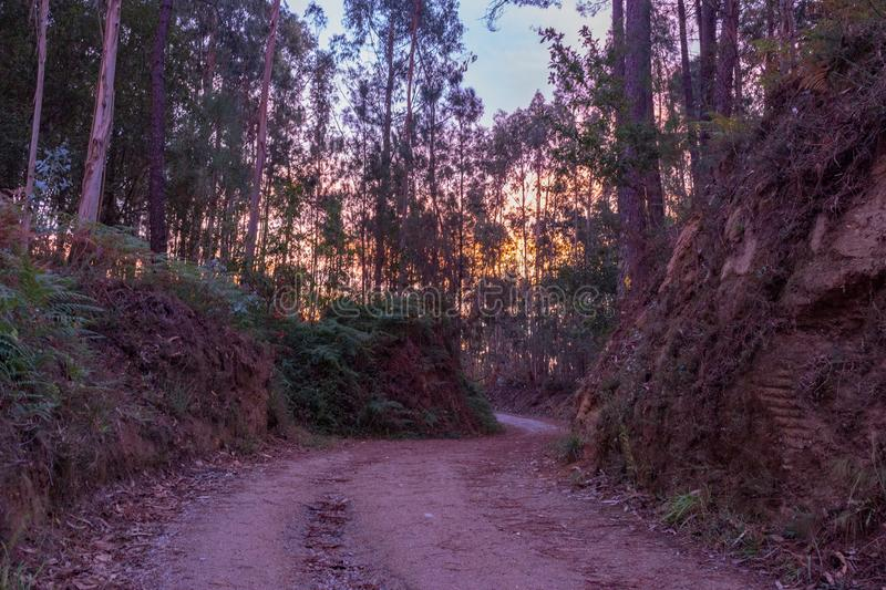 Empty road in deep forest early in the morning. Ancient footpath on Camino de Santiago, Spain. Rural way in morning haze in wood. stock images