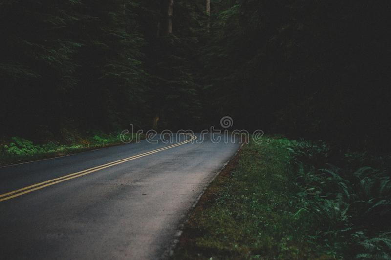 Empty Road Through Forest Free Public Domain Cc0 Image