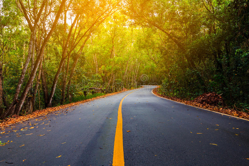 The empty road in forest and sunlight for nature background royalty free stock images