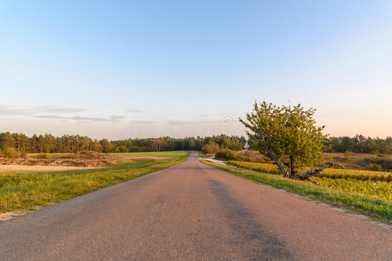 Empty road through French vineyards during sunset royalty free stock photography