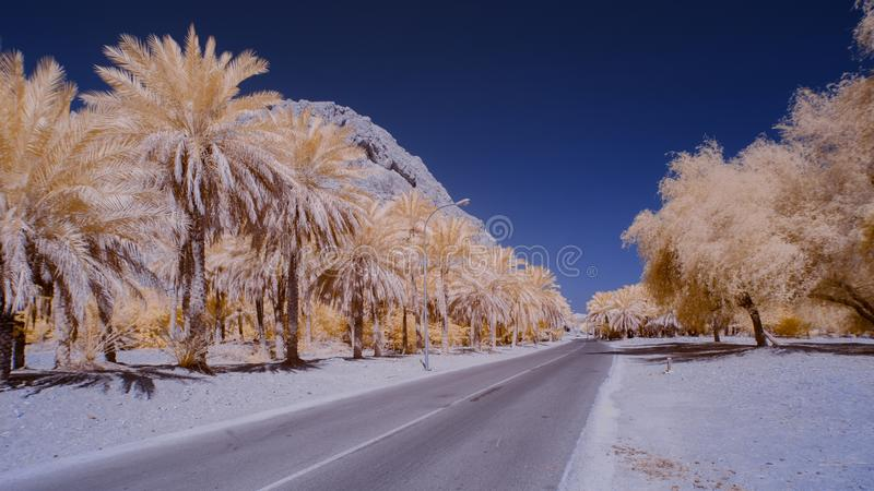 An empty road lined by trees against a clear blue sky stock photos