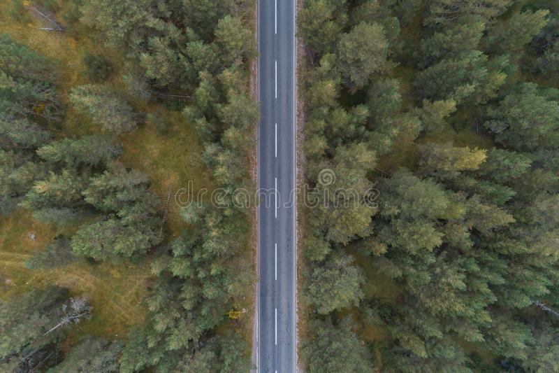 Empty road through the pine forest aerial view. Forest empty road, aerial view royalty free stock photography