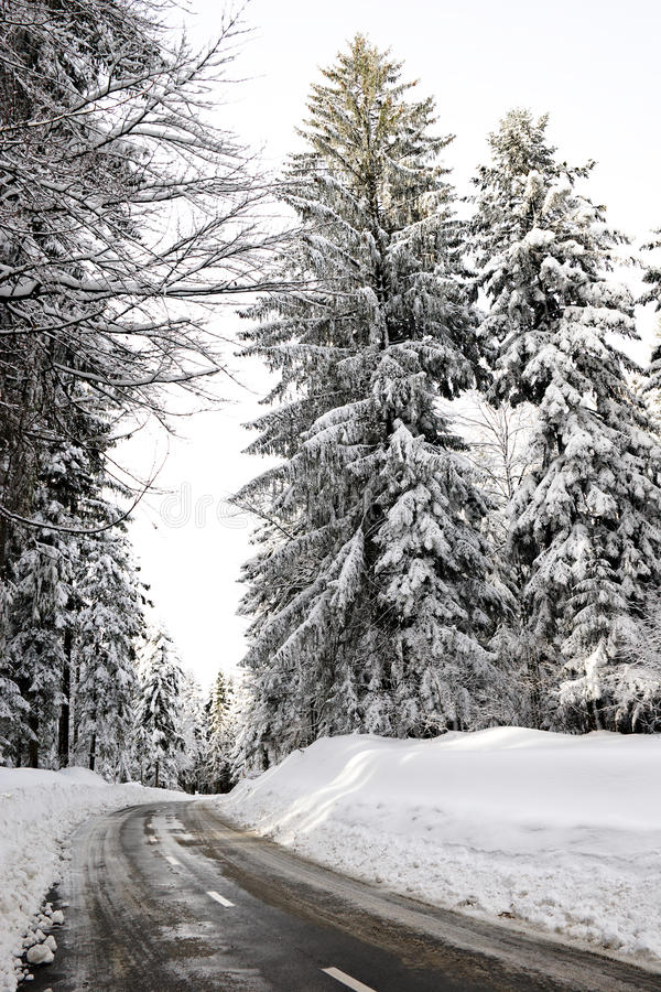 Download Empty Road In The Snowbound Wood Stock Image - Image: 17357453