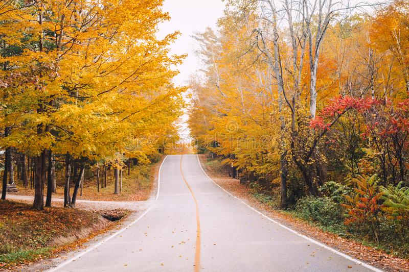 Empty road street in colorful autumn forest park royalty free stock photography