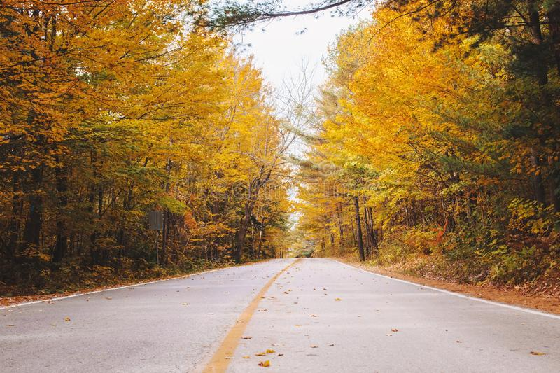 Empty road street in colorful autumn forest park royalty free stock image